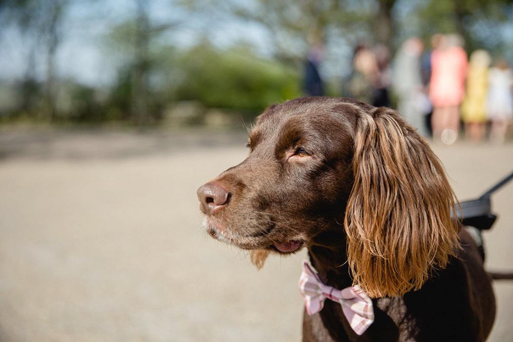 portrait of Dog friendly wedding venue oakwell hall